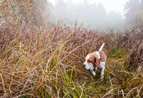 Innovative E-Collars: Use GPS to Enhance Your Hunting Dog's Efficiency
