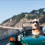 Find my dog: Whistle bringing GPS to next-gen pet wearable